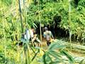 Bình Thuận: Chỉ đạo xử lý khai thác lồ ô trái phép trong Khu bảo tồn thiên nhiên Núi Ông