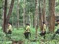 Quản lý, sử dụng và phát triển rừng bền vững