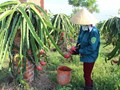 Vĩnh Phúc chứng nhận chất lượng sản phẩm OCOP cho các sản phẩm nông nghiệp