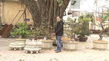 TT-Huế: Bắt đối tượng gây ra loạt vụ trộm cây mai cảnh