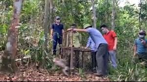 Hà Tĩnh: Thả cá thể khỉ và trăn quý hiếm về Vườn Quốc gia Vũ Quang
