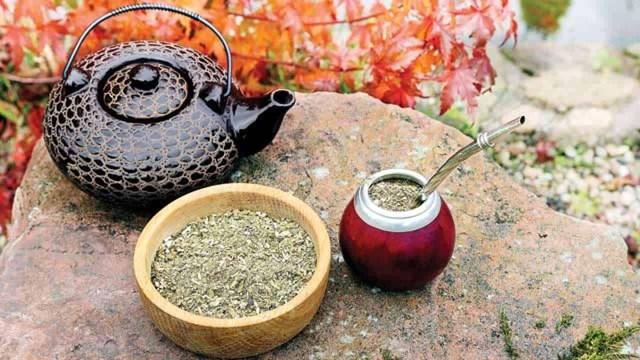 Trà Yerba Mate - thức uống nổi tiếng của Argentina đã có mặt tại Việt Nam - Ảnh 1