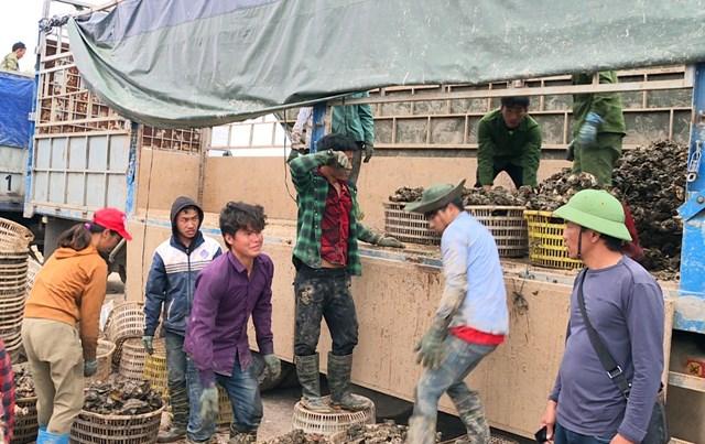 Tại khu vực Bến neo đậu tàu, thuyền và tránh trú bão Tân An (TX Quảng Yên), hàu cửa sông trên địa bàn thị xã đã liên tục được xuất bán.