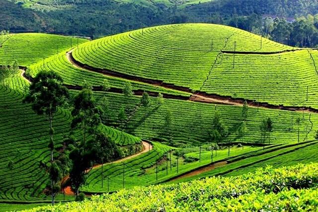 Ngày nay, trồng và sản xuất, chế biến trà là hình thức phát triển kinh tế nổi bật tại vùng đất Thái Nguyên. Trà Thái Nguyên trở thành thứ đặc sản không thể thiếu khi nhắc đến địa danh này.