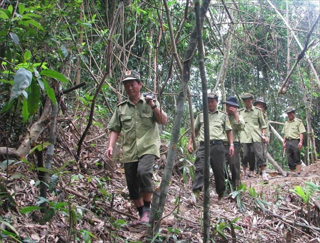 Lực lượng kiểm lâm Nam Đông tuần tra rừng (nguồn: Báo Thừa Thiên Huế).