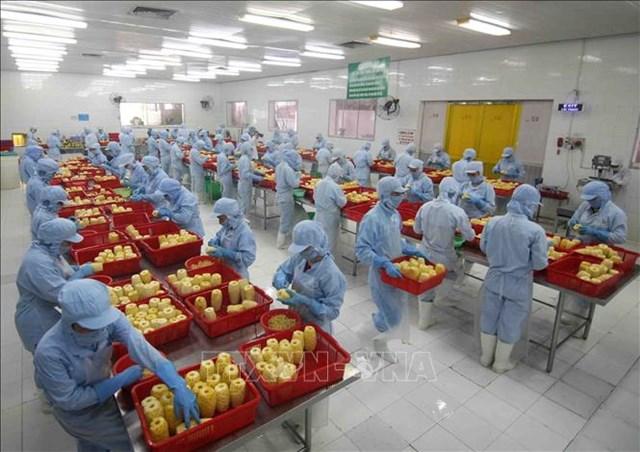 Lũy kế 5 tháng đầu năm, xuất khẩu nông lâm thủy sản ước đạt 23 tỷ USD - Ảnh 1