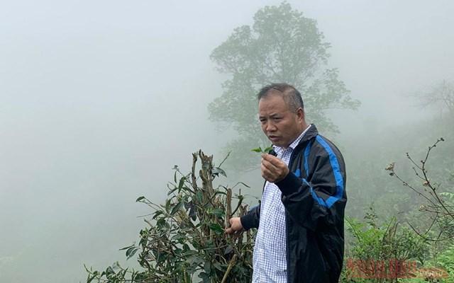 Ông Đặng Ngọc Phố - Chủ nhiệm HTX Sơn Trà - Ảnh: Báo Nhân dân