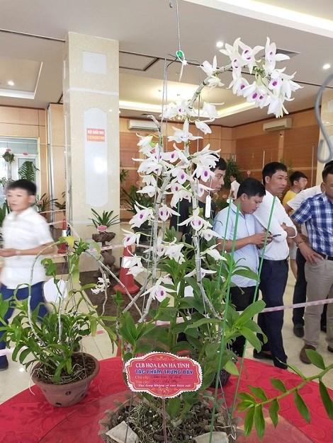 Một tác phẩm trưng bày vừa đẹp lại có giá trị kinh tế 5 cánh trắng Phú Thọ.