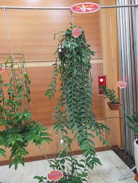 Một tác phẩm trưng bày thể hiện cách chăm về thân lá của một hội chơi lan ở Hà Tĩnh